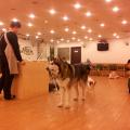 Admitir perros en el bar. Consejos sobre el éxito en hostelería. Hostelería Ecuador