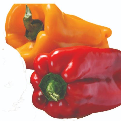 Proveedores de Pimiento rojo y amarillo | Flp del Ecuador