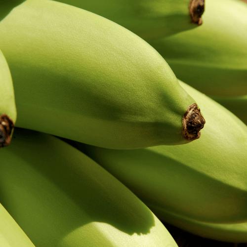 Proveedores de Orito verde | FLP del Ecuador